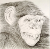 Ape, 1973, graphite on paper, 19
